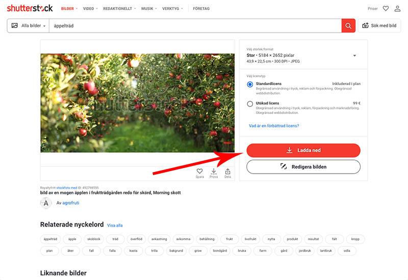 Ladda ner din bild på Shutterstock